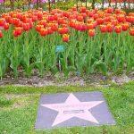 ऐश्वर्य राय ट्यूलिप फूल