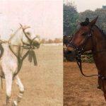 अजय पीरामल घुड़सवारी करते हुए